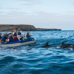 Spotting Dolphins in the Galapagos Islands